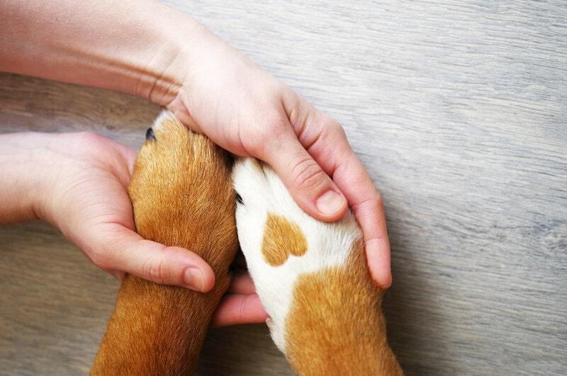 farmacia veterinaria parma